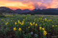 Camping, Golden Banner, June, Longs Peak, Moraine Park Meadows, RMNP, Rocky Mountain National Park, Summer, Yellow Flower, sunset