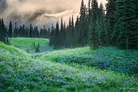 Backcountry,Camping,Mt Rainier National Park