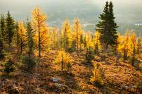 2014,Alberta,Assiniboine,Assiniboine Provincial Park,Larches,Mt. Assiniboine,September,canadian rockies