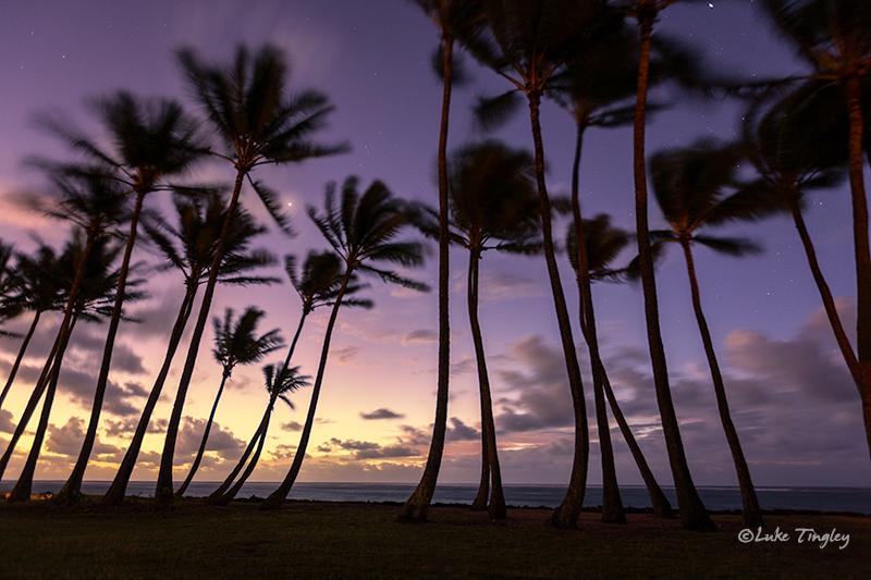 Kapaa,Kauai,Princeville, Hawaii, Palm Trees, photo