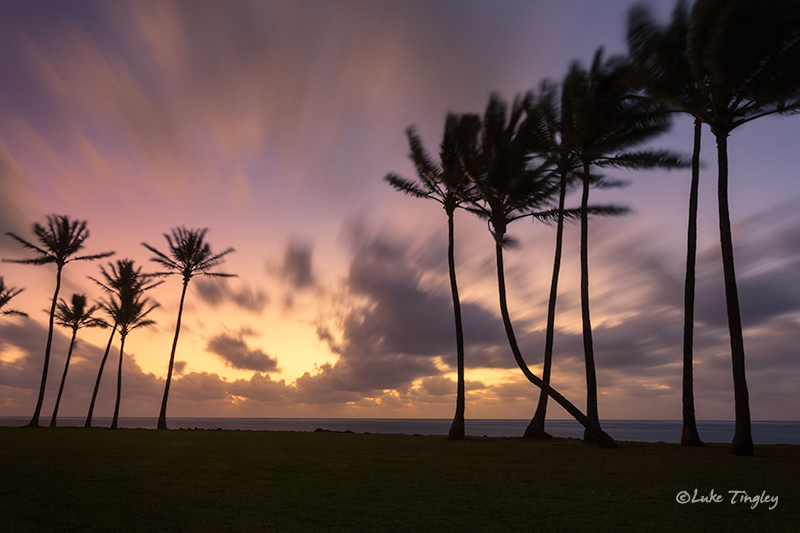 Kapaa,Kauai,Princeville, Palm Trees, Hawaii, photo