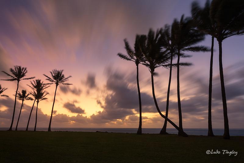 Kapaa,Kauai,Princeville, Palm Trees, Hawaii, photo