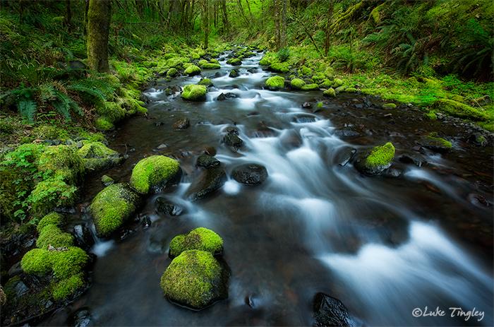 Columbia River Gorge, Oregon, Stream, Mossy Rocks, photo