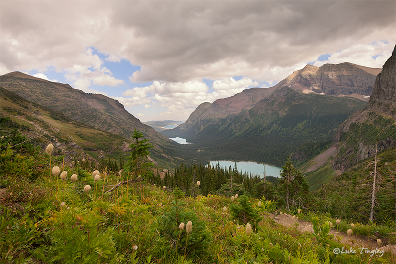 glacier national park, MT, Montana, GNP, grinnell lake, western pasque flower, overlook, many glacier