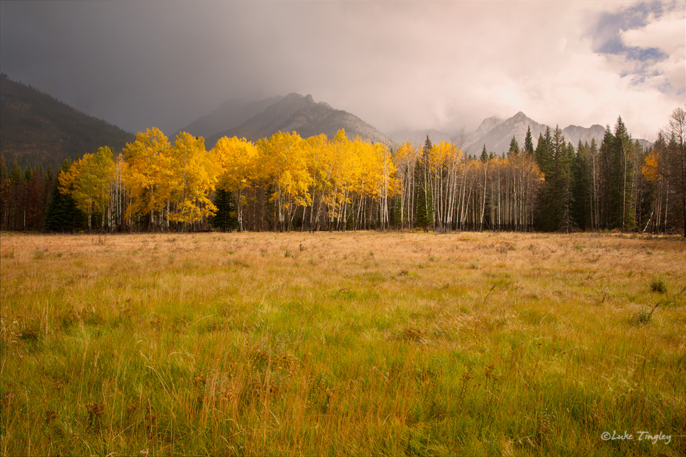 2014,Alberta,Rain,Canadian Rockies, aspens, storm, rain, photo