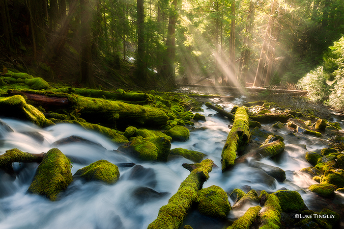 light beams, three sisters wilderness, moss, waterfalls, streams