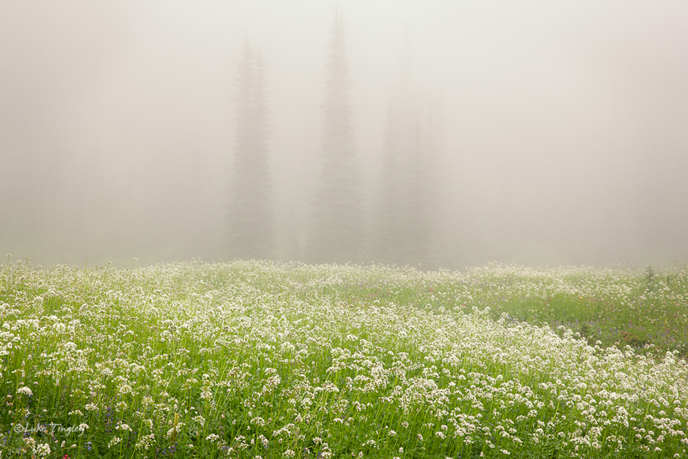 Wonderland Trail, Backcountry, Rainier National Park, WA, meadows, wildflowers, fog, photo