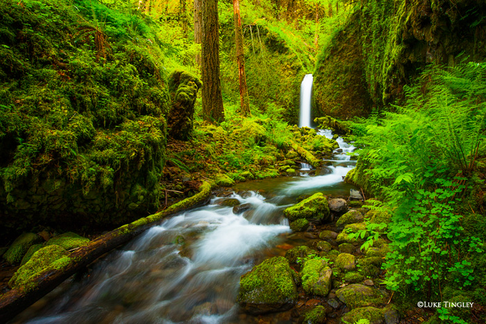 Backcountry waterfall in the heart of the Columbia River Gorge.