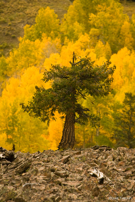 Telluride, Colorado, photo