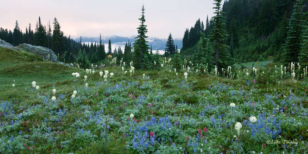 Mt Raininer, Rainier National Park, Washington, Camping, Tent, Backcountry, Wonderland Trail, Beargrass, Wildflowers, photo