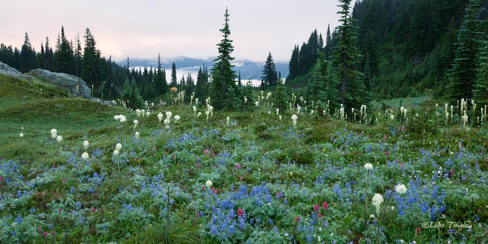 Mt Raininer, Rainier National Park, Washington, Camping, Tent, Backcountry, Wonderland Trail, Beargrass, Wildflowers, photo