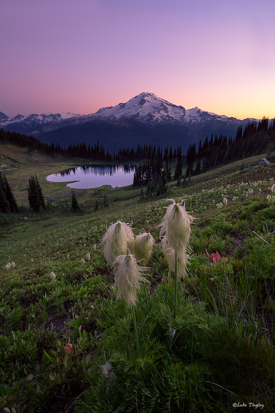 2018, Backcountry, Glacier Peak, Glacier Peak Wilderness, Image Lake, Summer, Western Pasque Flower, Wildflowers, Washington, photo