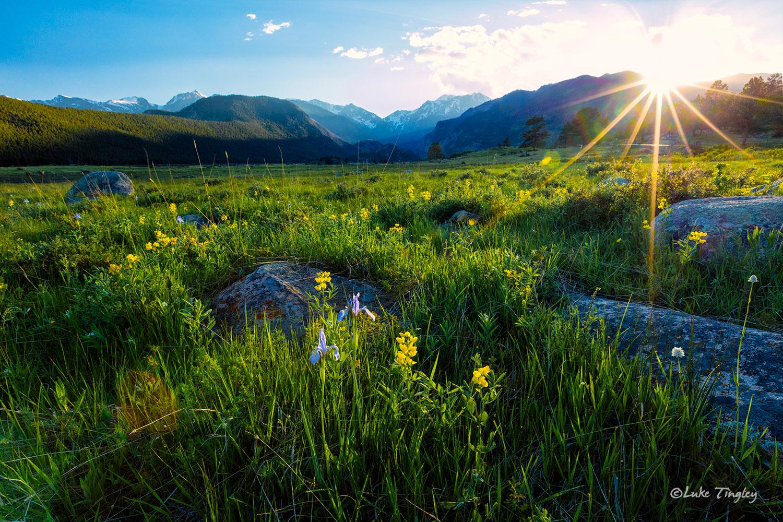 Camping, Golden Banner, June, Longs Peak, Moraine Park Meadows, RMNP, Rocky Mountain National Park, Summer, Yellow Flower, sunset, photo