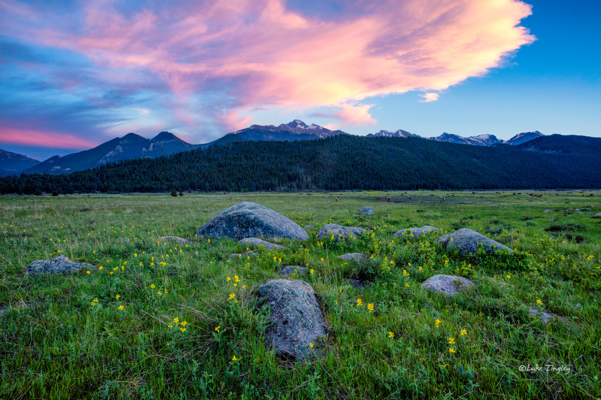 Camping, Golden Banner, June, Longs Peak, Moraine Park Meadows, RMNP, Rocky Mountain National Park, Summer, Yellow Flower, sunset, photo